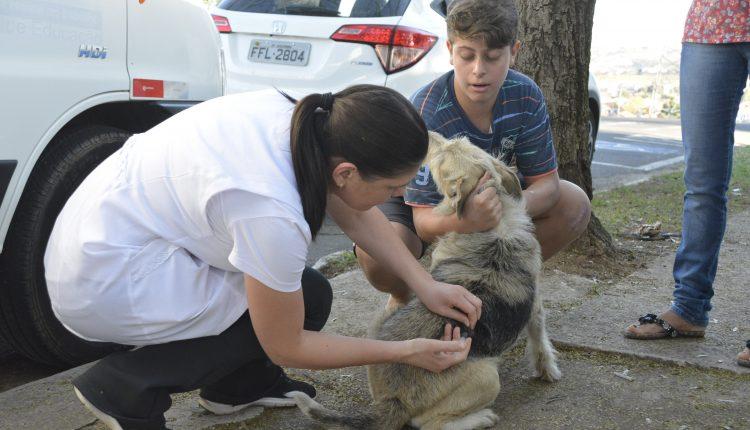 Campanha de vacinação contra raiva animal começa neste sábado em Jaguariúna