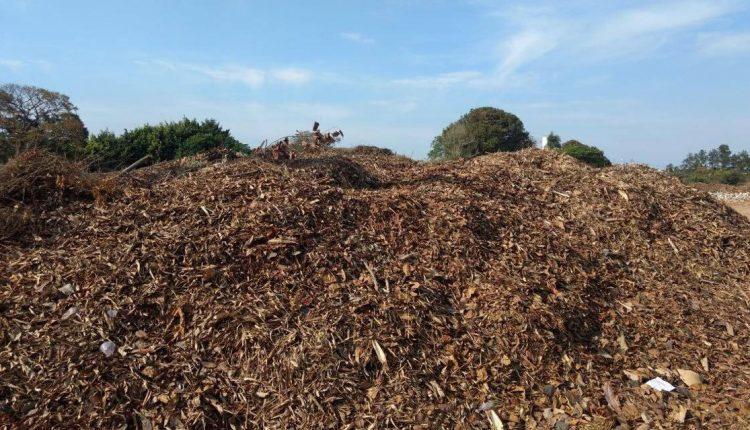 Projeto inédito de compostagem gera adubo orgânico para Viveiro Municipal e hortas escolares de Jaguariúna