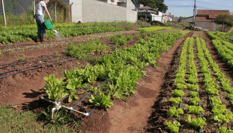 Prefeitura incentiva cultivo de hortas urbanas e divulga benefícios garantidos por lei municipal