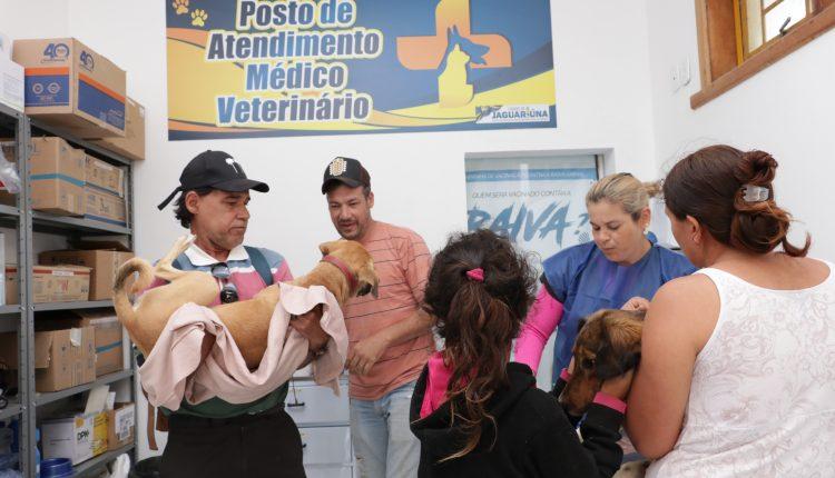 Quase 50 cães são castrados de graça em um único dia